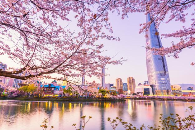 cherry-blossom-of-spring-in-seoul-south-korea_40171-204
